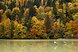 Picture of a colorful forest in autumn around lake Vallon