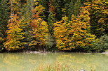 Picture of the autumn colors in the alpine forest around lake Vallon