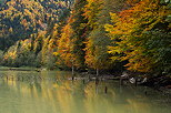 Image of autumn colors on the bank of lake Vallon in Bellevaux