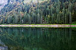 Picture of a mountain forest and its reflection in the water of Montriond lake