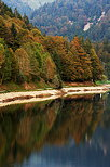 Image of the autumn forest on the bank of Montriond lake