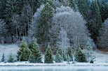 Photo of the morning frost on the forest and banks of Genin lake