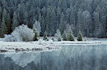Image of the forest and banks of Genin lake whitened by morning frost